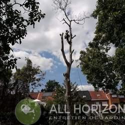 All Horizon - Galerie photos